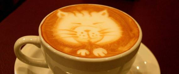 gatos longevos cafe