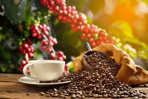 Venta de café al por mayor en Valencia